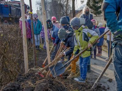 Výsadba nových stromov na Cementárskej ulici vLadcoch 2021