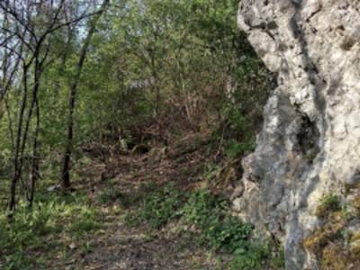 Lesík za sochou p. Márie